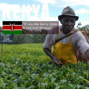 kenya-plantation-8