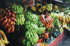 Bananes Madagascar