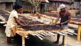 Séchage vanille Madagasacar